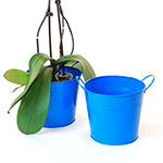 6 1/2in. Blue Painted Pail w/Side Handles
