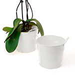 6 1/2in. White Painted Pail w/Side Handles